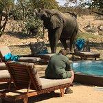 Visite d'éléphant au camp !