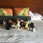 Animals Arranged by Housekeeping. So Sweet!