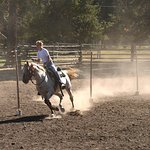 Pole bending at horse games.