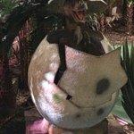ein Baby-Dino schlüpft