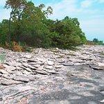 Stone Road Alvar Nature Reserve