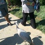 Our bird guide