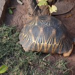 Another garden resident