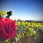 Photo de Le Clos du Mont D'Hor