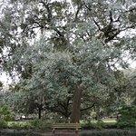 Des arbres splendides