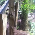 Bridge of split wood over Barnes Creek