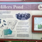 Millers Pond