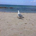 La spiaggia della Licciola, alba allarcipelago, gli Zini.
