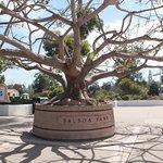 A Balboa Tree at Balboa Park :P