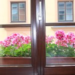 All windows have beautiful flowers
