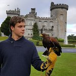The Hawk Walk Experience at Dromoland Castle
