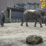 Foto de Tiergarten Schoenbrunn - Zoo Vienna