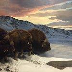Canadian Museum of Nature Foto