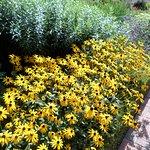 the perennial garden near the home