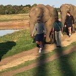 Elephant Sanctuary Foto