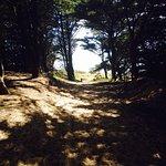 Photo de Camping La Forêt