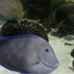 Mote Marine Laboratory and Aquarium
