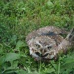 Owls were super cute :)