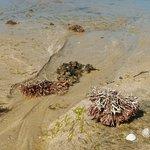 Espelho Beach (Praia do Espelho) Foto