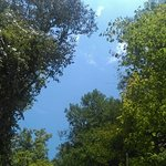 IMAG0838_large.jpg