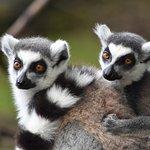 Lakeland Wildlife Oasis