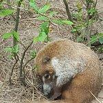 The Belize Zoo Foto