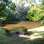 Pond from the cabin