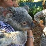 Kuddly Koala!