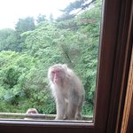 A family of Monkeys came to our windows at 6am one morning