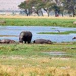 Amboseli Park