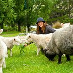 Feeding our pet sheep, a real kiwi experience