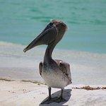 Aux dauphins.... un visiteur