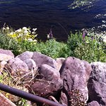 rocks and flowers at edge