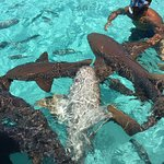 Photo de Coastline Adventures Exuma