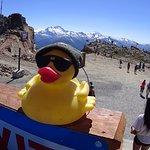 Duck on the Peak of Whistler