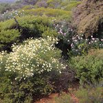 It's August and its wildflower season in Kalbarri Gorge National Park. We spent 3 nights at the