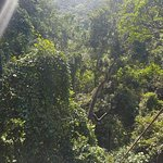 Jungle Surfing Canopy Tours Foto