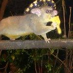 I met the fastest possum in Mexico