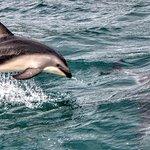 Dolphin Encounter Foto