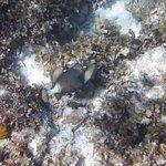 The marine life at Siete Pecados #6