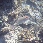 The marine life at Siete Pecados #8