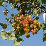 Fruit grown in the Monastery in Paleokastritsa