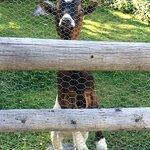 Einer der Bewohner der Schaukäserei :-)