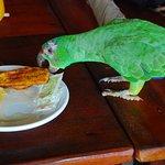 birds entertain you !!