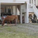 Foto de Wild Horse Adventure Tours