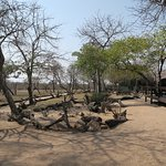 Nkorho Bush Lodge Photo