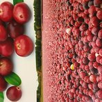 Iroquois Cranberry Growers