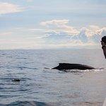 Ann en el agua intentando ayudar a una ballena