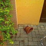 P_20160801_093925_large.jpg