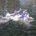 Photo of Dolphins Plus - Key Largo